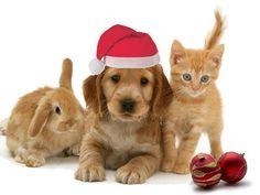 Golden friends looking for Santa