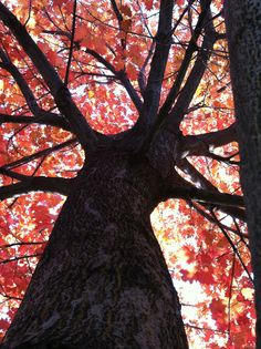 under a tree in the fall