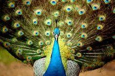 fotos increibles de animales salvajes - Buscar con Google