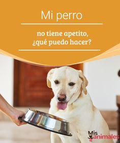 Mi perro no tiene apetito, ¿qué puedo hacer?  ¿Conoces los motivos por los que un perro no tiene apetito?Si un can está físicamente sano es poco probable que pierda las ganas de comer, salvo que deteste el alimento. #apetito #motivos #comer #consejos