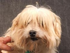 Adopt Ladybug, a lovely 7 years Dog available for adoption at Petango.com…