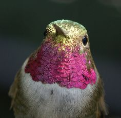 Wow. If I was a hummingbird I'd want to date this guy.