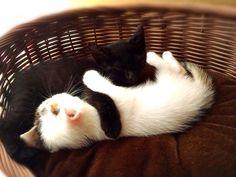 重なり寝 #Cat #Baby #子猫 #黒猫 #白猫