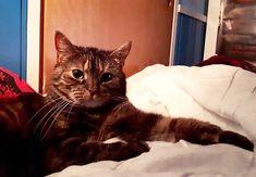 """Hooman I am concerned about ur sleeping habits. It late go the fuck to sleep."" . . . #viiruthecat #cats #instacat #catsofinstagram #howdoisleep"