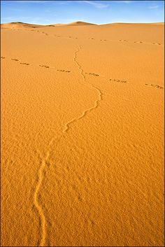 The desert near Djanet, Algeria