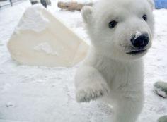 Polar bear | The Toronto Zoo | Facebook