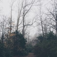 """""""was up early enough today to see the morning fog """""""