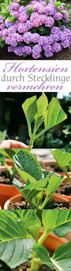 DIY Autoreifen bunt anmalen als Gartengestaltung Kunst, Design