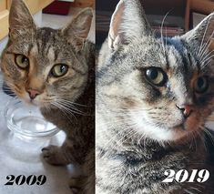 ...'spotted a few amazing posts in the #tenyearchallenge on instagram. How you humans stay so young on just one life is unbelievable! 🙀 .. I had to waste three of my nine lives just to stay in shape. I think I'm doing okay though. I just need to get my eyebrow whiskers trimmed back a bit, they're growing like weeds these days!! ..Any tips welcome! . . #catproblems #cat #catsofinstagram #2019 #cats #katt #kissa #katze #gato #decade #catoftheday #catproblems #meeveryday #mollycatfinland… Big Cats, Cute Cats, Nine Lives, Small Cat, Stay In Shape, One Life, Eyebrow, Cat Day, Finland
