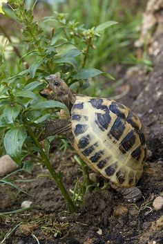 We loved finding a tortoise in the garden