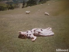 Lorde for Billboard Magazine