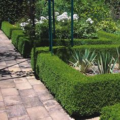 "Hedge! From ""The Laurel Hedge"" blog"