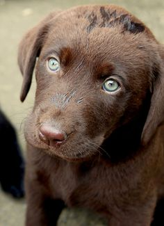 """""""You're starring into my eyes, aren't you?"""" #eyes #cutest #puppy #naturessleep"""