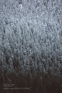 Snow tops - Pinned by Mak Khalaf Nature CanonNatureNickcarneraPnwSnowTreesWashington by nickcarnera