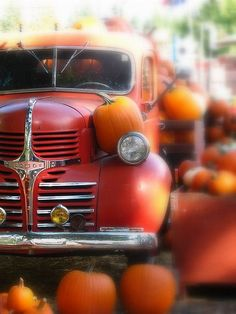 Autumn harvest time. Pumpkins and a fantastic old red Chevy truck.