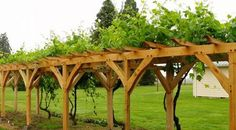 Landscaping And Outdoor Building , Outdoor Pergola With Grapes : Wooden Pergola With Grapes