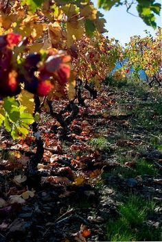 ❖ Paisatges i Jardins ❖ Landscapes and Gardens: Priorat paisatges de vi i vinyes - Tarragona - Catalunya