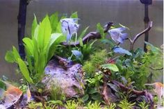 An aquarium will enliven and enhance the feng-shui (atmospheric flow) in any environment. Aquarium cleaning is an undesirable chore, especially for busy people. However, ignoring a dirty fish tank for too long will lead to foul odors and eventually, dead fish. While a 100-percent self-cleaning aquarium isn't possible, with the right ingredients...