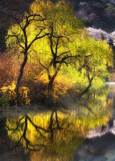 Pond South Korea And Korea - The beauty of south korea captured in stunning reflective landscape photography