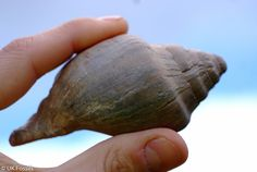 Barton on Sea - fossil collecting Fossil Hunting, Picnics, Minerals, Shells, Rocks, Gems, Crystals, Places, Collection