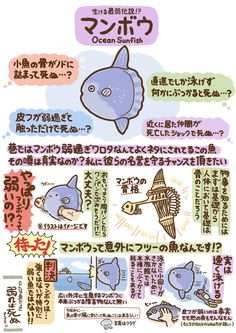 Sunfish are incredibly cute Zoo Animals, Animals And Pets, Cute Animals, Animal 2, Ocean Creatures, Ocean Life, Cute Illustration, Marine Life, Animal Drawings