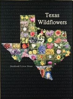 Texas Wild Flowers in the shape of the state. Shes Like Texas, Eyes Of Texas, Texas Plants, Texas Treasures, Only In Texas, Texas Ranch, Texas Forever, Texas Bluebonnets, Loving Texas