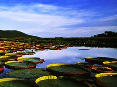 The Pantanal is also an important tourist destination in Brazil, for its fauna and flora. Description from paradiseintheworld.com. I searched for this on bing.com/images