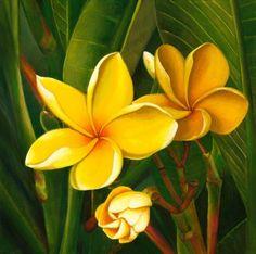 Puamelia Mele - Yellow Plumerias(Giclee on Canvas) Tropical Art, Tropical Flowers, Tropical Paintings, Plumeria Flowers, Big Plants, Exotic Plants, Flower Pot Design, Flower Art, Hawaiian Art