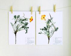 Poppy Botanical Print set Herbarium Specimen by DayThreeCreations, $20.00