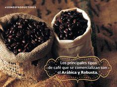 Los principales tipos de café que se comercializan son el Arábica y Robusta. SAGARPA SAGARPAMX #SOMOSPRODUCTORES