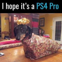 If the PS4 had backwards compatibility, then yeah, if not, I'll take the dog...and I'm allergic to dogs.