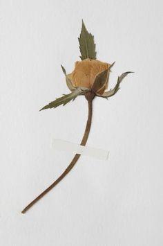 | FLOWER PRESS WALNUT Leaf Tattoos, Woodworking, Flowers, Florals, Joinery, Wood Working, Woodwork, Carpentry, Flower
