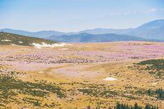 Covor de brandușe: Vedere de pe Vf Buteasa   Bihor in imagini Grand Canyon, Mountains, Nature, Travel, Naturaleza, Viajes, Destinations, Grand Canyon National Park, Traveling