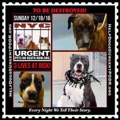 3 PRECIOUS DOGS 2B DESTROYED TOMORROW. SUNDAY! PLEASE READ THEIR STORIES..FOR EVERY NIGHT WE TELL THEIR STORIES...NYC. Dedicated to Saving NYC Shelter Animals
