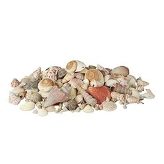 Advertisement - Decorative Seashell Set, 2 kg Colourful Clam and Snail Shell Mix, Maritime Decor Shell Decorations, Shell Ornaments, Family Painting, Kegel, Elephant Figurines, Vase Fillers, Drip Painting, Tree Sculpture, Seashell Crafts