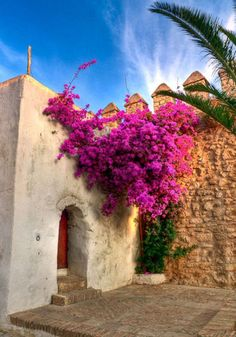 bougainvillea flowing over castle.. must have these flowers all over my house one day :)