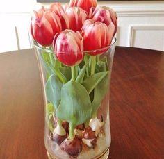 Секрет выращивание тюльпанов в прозрачной вазе — БУДЬ В ТЕМЕ