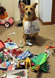 Câini şi pisici care au distrus Crăciunul! #funny #dog #christmas