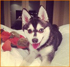 James Maslow Shares A Photo Of His Dog Fox On January 4, 2013