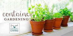 Container Gardening: Growing plants and herbs in pots | 1000 - Modern#container #gardening #growing #herbs #modern #plants #pots Growing Herbs Indoors, Growing Plants, Container Gardening Vegetables, Vegetable Gardening, Healing Herbs, Terracotta Pots, Garden Crafts, Natural Living, Herb Garden