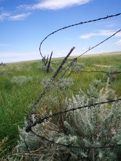 Barbed Wire...time to build fence!