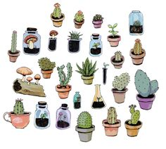 Succulent and cactus illustration.