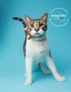 Adopt Rocky On In 2020 Cat Adoption Cool Cats Cats