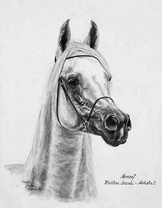 Arabian Horses | Animal Art by Monika Pehr