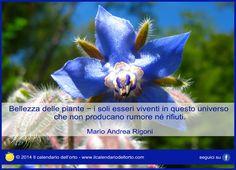Bellezza delle piante - i soli esseri viventi in questo universo che non producono rumore ne rifiuti. Mario Andrea Rigoni