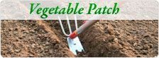 Things To Do In The Vegetable Patch in February - Moderne Ideen Stuff To Do, Things To Do, Garden Tools, February, Patches, Vegetables, Gardening, Lawn And Garden, Things To Make