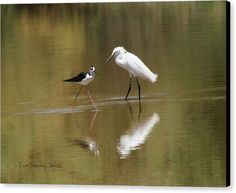 Snowy Egret Canvas Print featuring the photograph Snowy Egret And Stilt In Golden Pond by Tom Janca
