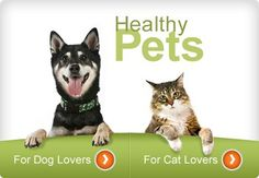 Pet health care/diet and nutrition/behavior and training, etc by WebMD pet health Pets Pet Insurance Reviews, Best Pet Insurance, Cat Care Tips, Dog Care, Cat Health, Health Care, Veterinary Care, Healthy Pets, Dog Agility