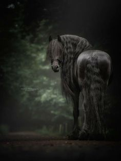 How I would love to go for a ride on this black beauty! ~Black Horse by Monica van der Maden on