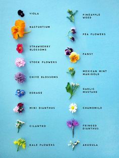 Edible flowers chart.